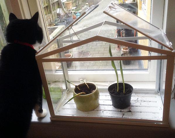 Blomsterløg og katte