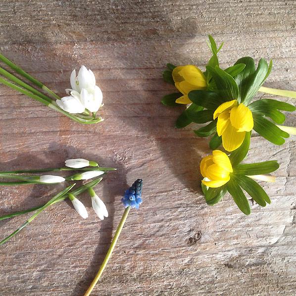 Blomster i februar